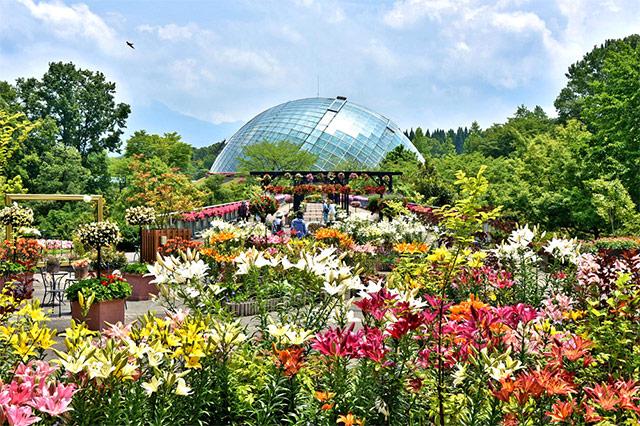 花々の楽園