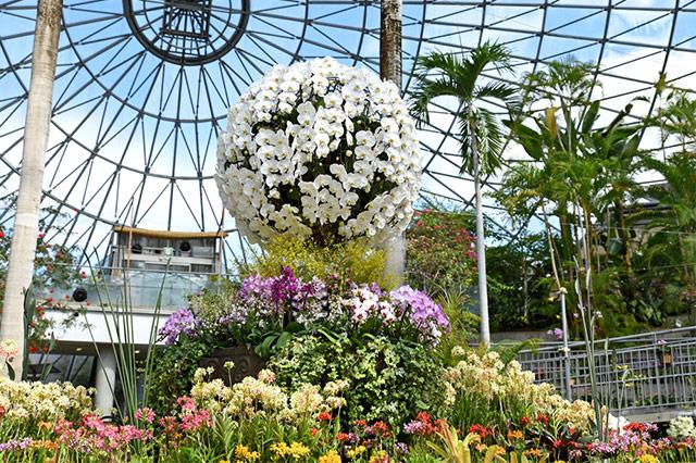 熱帯・亜熱帯植物