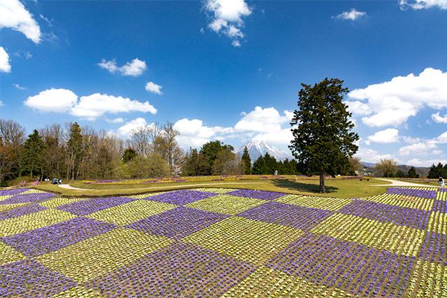 メインスポットの「花の丘」