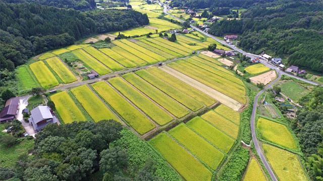 「仁多米」で知られる有数の米どころ